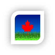 Canadian flag planted in a green lawn